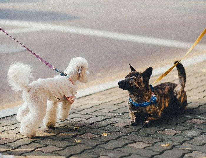 perros-calle-encuentro